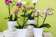 3 Tanaman Hias Bunga Yang Cocok Untuk Ditempatkan Di Dalam Ruangan